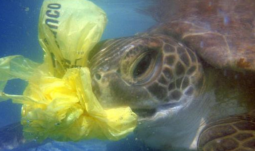 life out of plastic